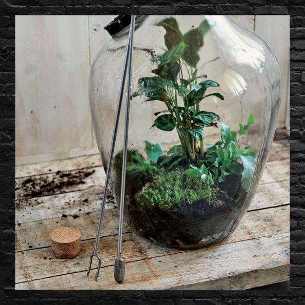 Terrarium et bonsaï : outils