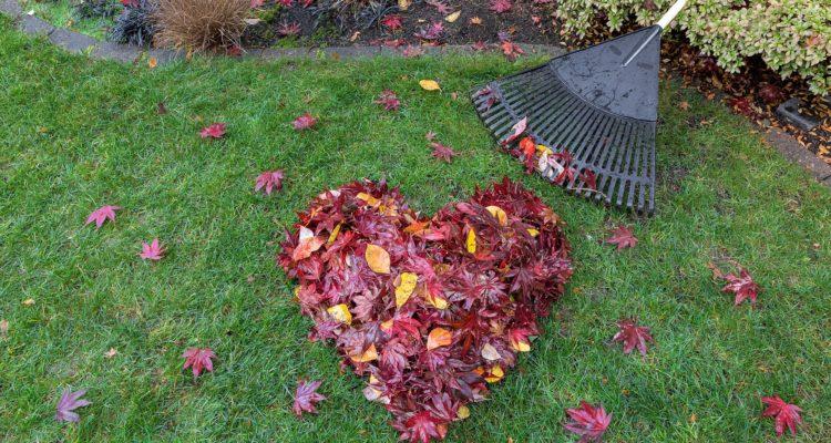 râteau - feuilles morte