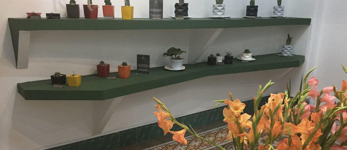 new product 4f1bc 53af8 Cuba   être fleuriste à Cienfuegos...   Hortus Focus I mag