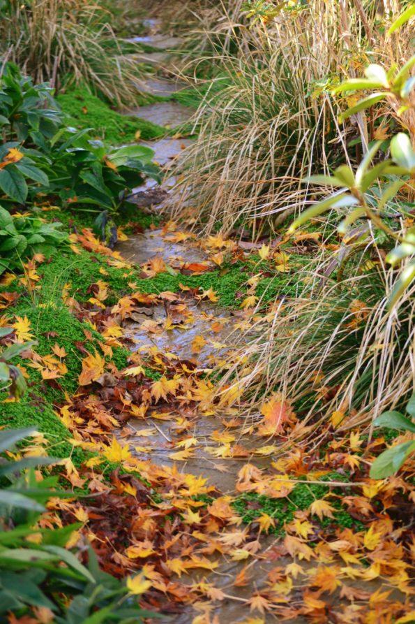feuilles : Jardin Kériel