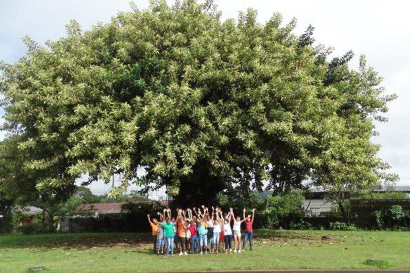 arbre : caoutchouc de Matoury