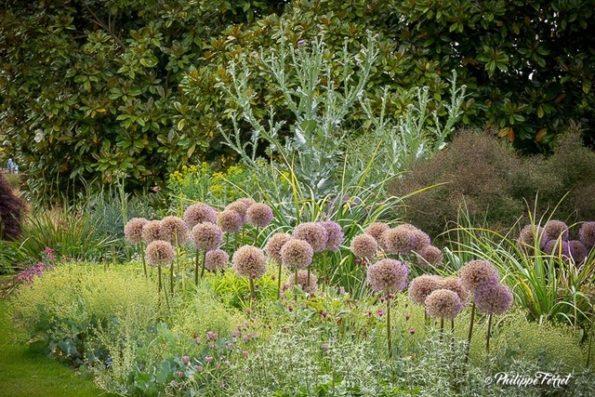 aulx : Allium 'Globemaster', Eryngium bourgati, Dianthus carthisanorum, Onopordon acanthium