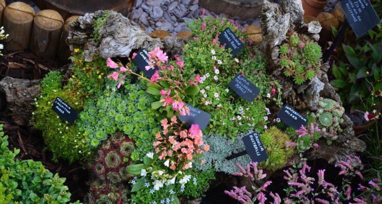 Comment réaliser une rocaille en auge - Hortus Focus I mag