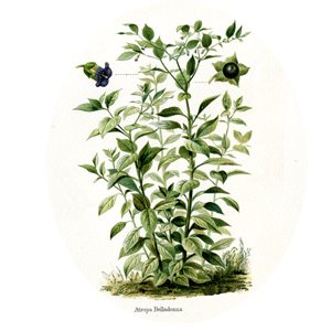 belladonne