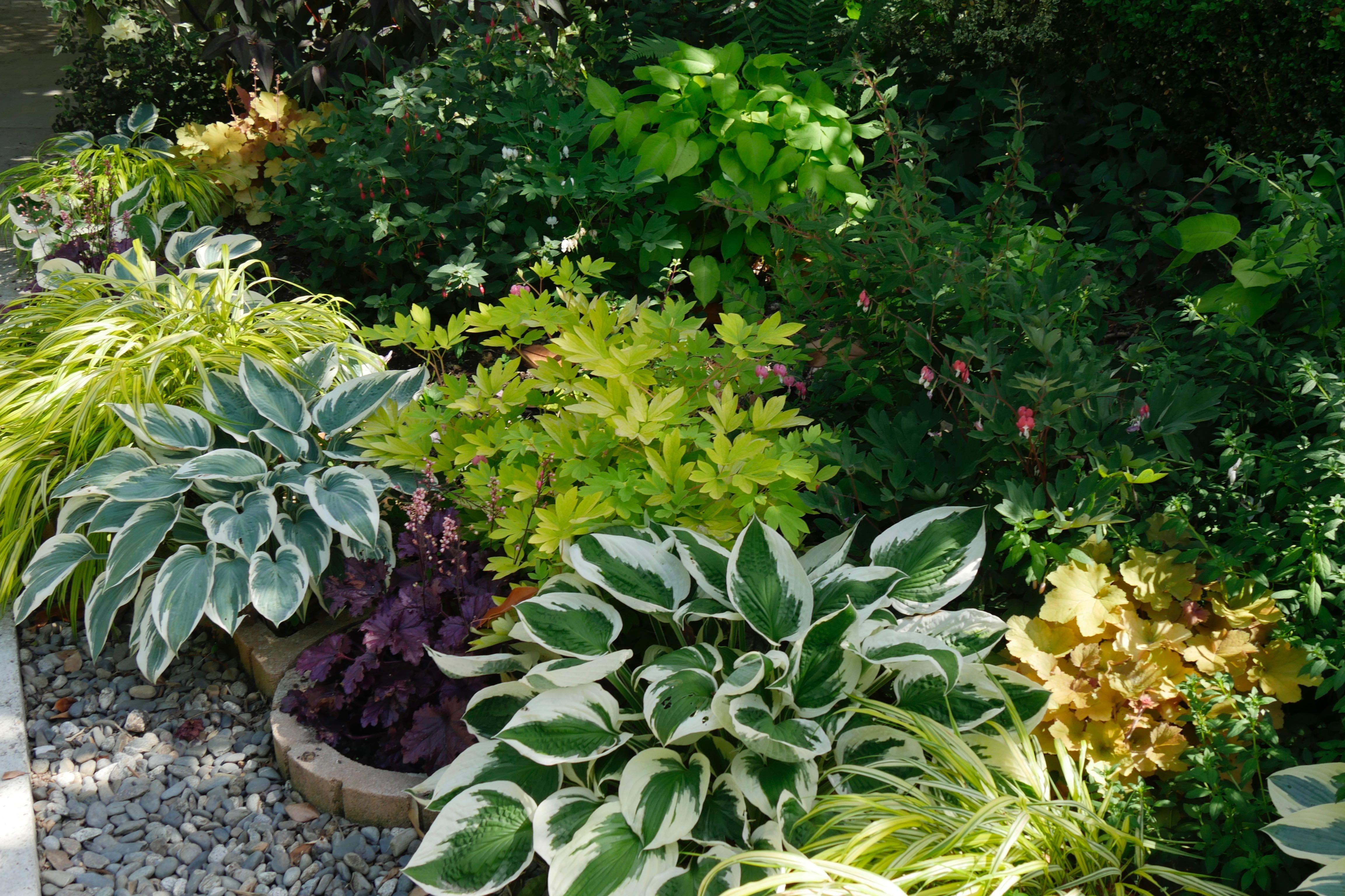 Quoi Planter En Octobre où planter les hostas ? avec quoi ? - hortus focus i mag