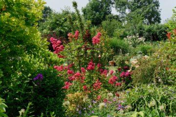 Le jardin d'Elouise