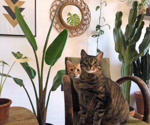 chat et plante dans la maison