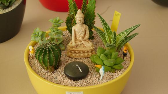 Mini-jardin de plantes grasses