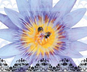 lotus abeilles et dentelles