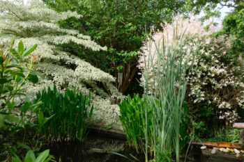Jardins du Domaine Albizia