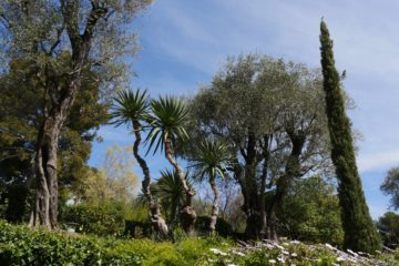 Jardin du musée Renoir - Alpes Maritimes