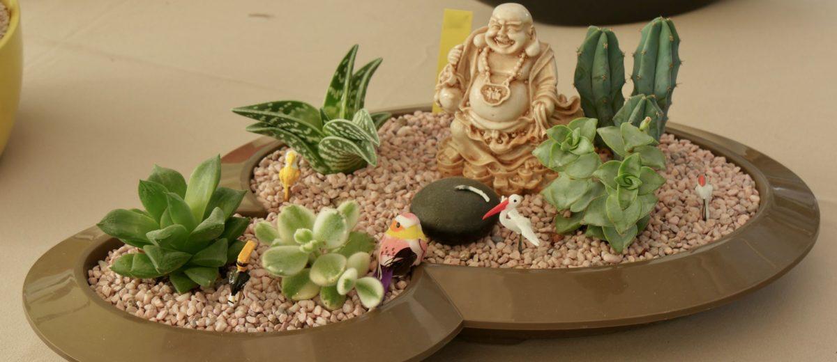 mini-paysage : cactus et succulentes... bouddha zen