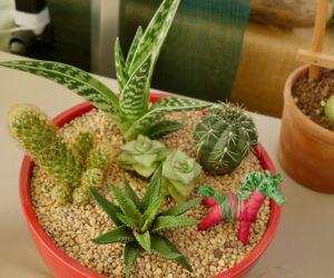 Mini-paysages : Cactus et succulentes