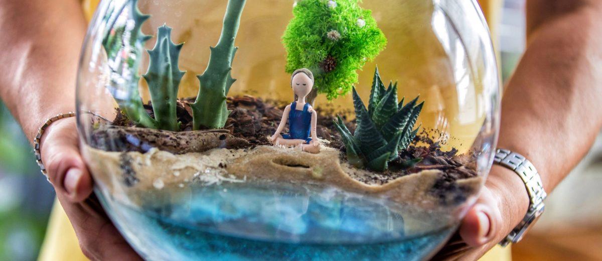 mini-paysages : cactus et succulentes... zen