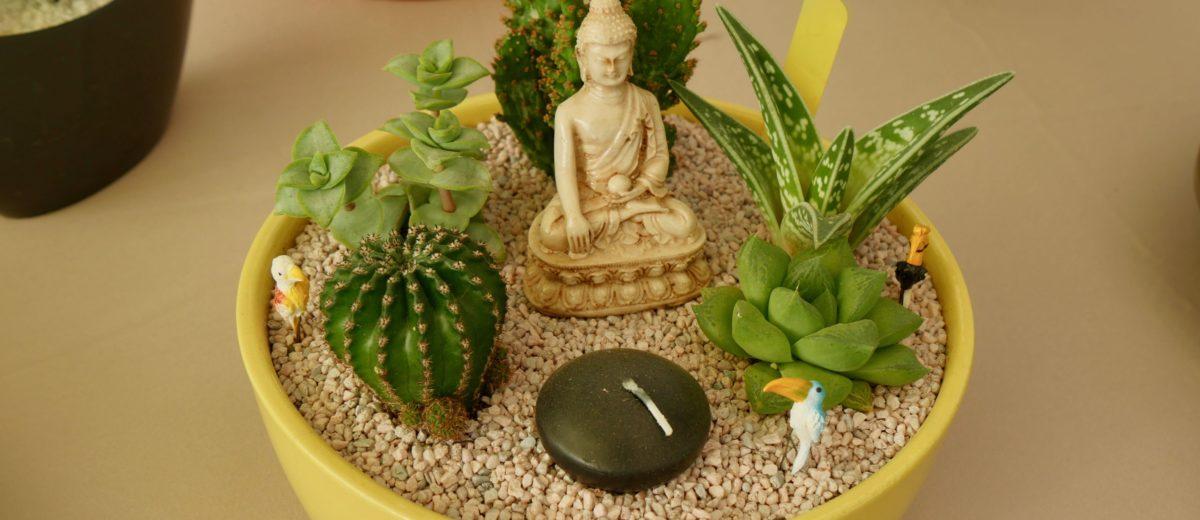 mini-paysages : cactus et succulentes... bouddha