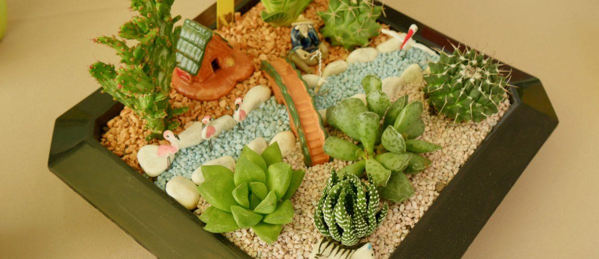 mini-paysages : cactus et succulentes... pont