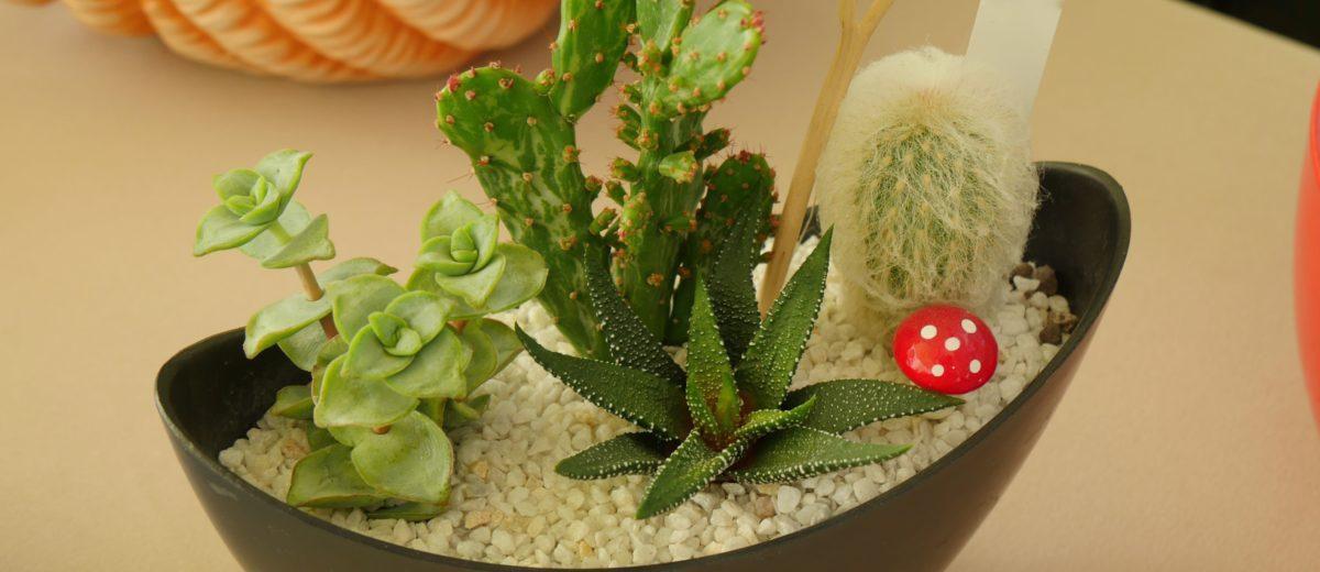 mini-paysage : cactus et succulentes... champignon