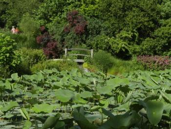 Le bassin des Lotus, jardin des Martels