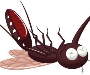 moustique mort