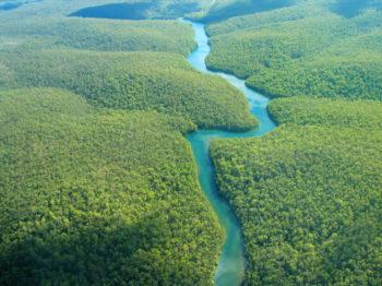 Le fleuve Amazone vu d'avion - Johnny Lye - Hortus Focus