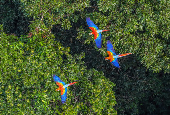 Amazonie, canopée, aras, ricardo stuckert, hortus focus