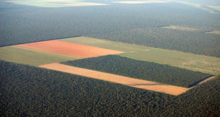 amazonie, déforestation et écocide - hortus focus