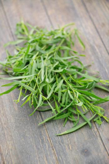 estragon - Artemisia Dracunculus - hortus focus