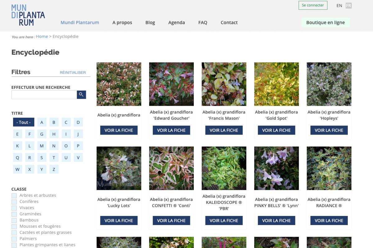 Mundi Plantarum - hortus focus