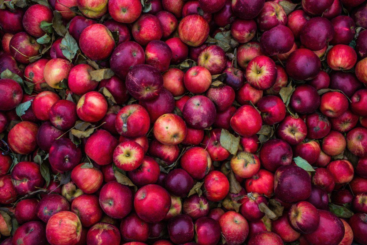 pommes - hortus focus