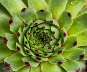 succulente - hortus focus