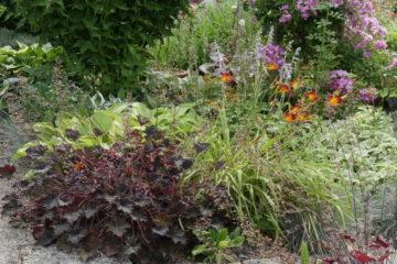Massif dans le Jardin d'Elouise - Hortus Focus
