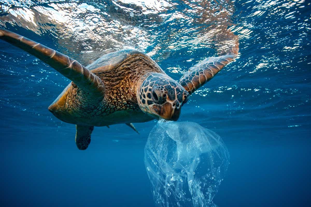 Plastique: tortue et sac