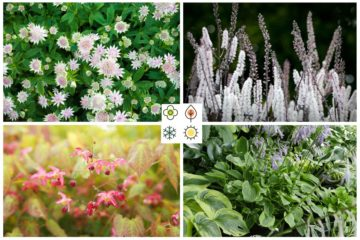 4 saisons : fleurir