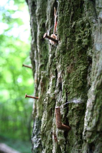 arbre à clous Havré
