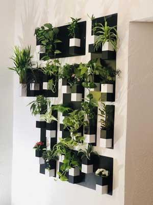 Cadeau : Mur végétal Capill'O Cube