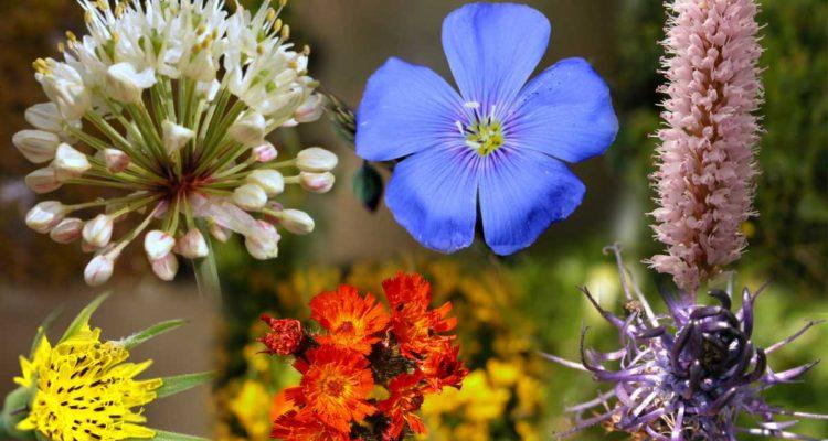 Flore d'Alsace