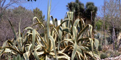 Jardin botanique Nice - Hortus Focus