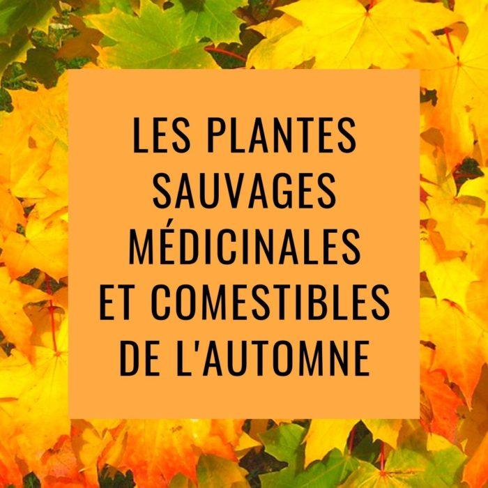 Les plantes sauvages médicinales et comestible d'Automne