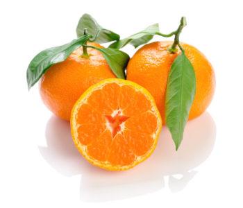 Citrus unshiu - Satsuma - Hortus Focus