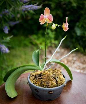 Cadeau : Pot pour Orchidées