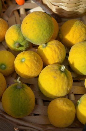 Fruits de Poncirus trifoliata