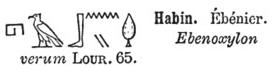 ébénier hiéroglyphes