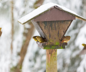 Mangeoire à oiseaux - Hortus Focus