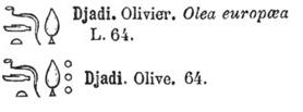 olivier, olive - hieroglyphes