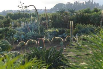 Parc botanique Radicepura - Hortus Focus