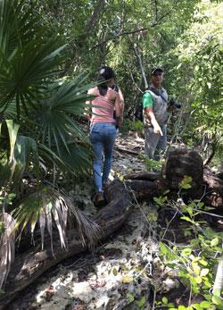 Randonnée, marais de Zapata