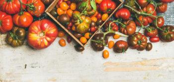 tomates - hortus focus