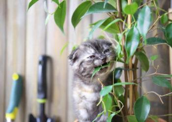 chat et ficus