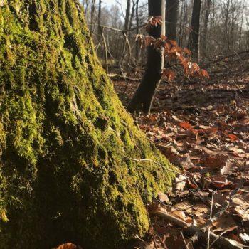 Nature : Picardie - Forêt d'Ermenonville