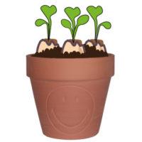 semer des radis : le repiquage
